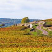 Randonnée vignobles Côte de Beaune en Côte-d'Or